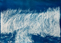 """Sway, cyanotype from paper negative, 38""""x 51"""", 2015."""