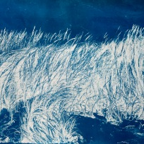 "Sway, cyanotype from paper negative, 38""x 51"", 2015."