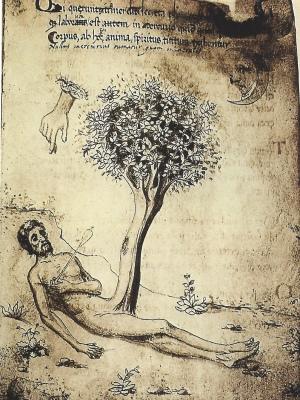 philosophytree 1