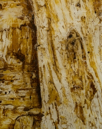 Detail, Flayedtree, paper with beeswax and ink, 2015.
