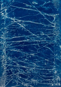 """Reaching Branches, cyanotype from paper negative, 36"""" x 26"""", 2015."""