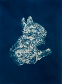 """Dead Thiongs: Rabbit (Surrogate), From the Archive of SIEN Collective, cyanotype from paper negative, 11""""x15"""", 2015 Collective"""