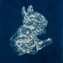 "Dead Thiongs: Rabbit (Surrogate), From the Archive of SIEN Collective, cyanotype from paper negative, 11""x15"", 2015 Collective"