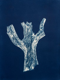 """Percival, From the Archive of SIEN Collective, cyanotype from paper negative, 11""""x15"""", 2015"""