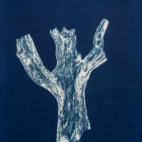 "Percival, From the Archive of SIEN Collective, cyanotype from paper negative, 11""x15"", 2015"